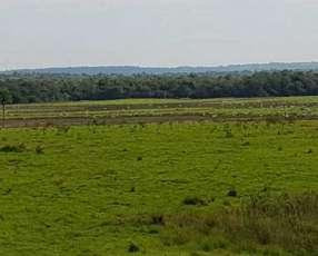100 hectáreas en San Pedro del Paraná