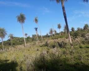 4 hectáreas en la ciudad de Eusebio Áyala sobre ruta