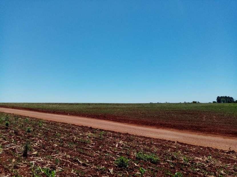 Lote de 5 hectáreas en Km 37 - 3