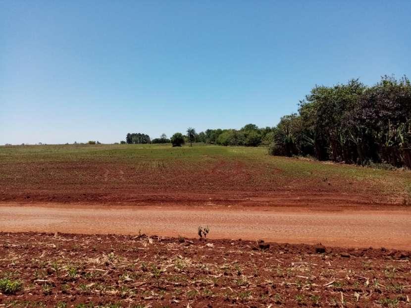 Lote de 5 hectáreas en Km 37 - 4