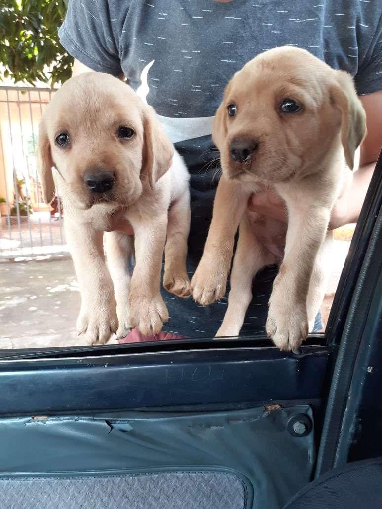 Cachorros de pura raza - 0