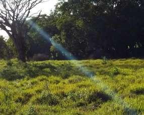 500 hectáreas en Misiones