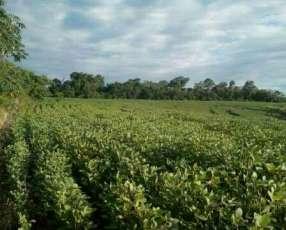 55 hectáreas en Alto Verá