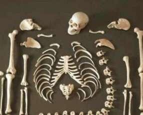 Esqueleto Humano real para estudiantes de medicina