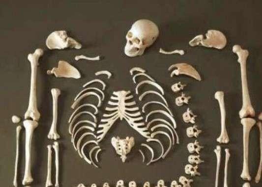 Esqueleto Humano real para estudiantes de medicina - 0