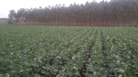 Hacienda de 1.403 hectáreas en Santa Rita Alto Paraná