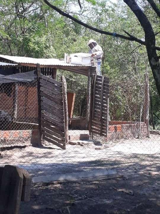 Miel pura del chaco paraguayo - 2