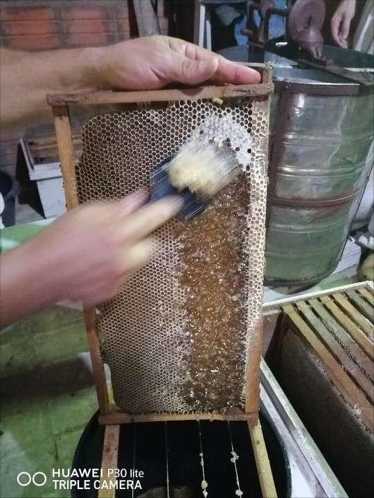 Miel pura del chaco paraguayo - 3