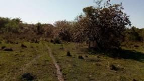 Terreno de 6 Hectáreas y media en paraguari para casa quinta