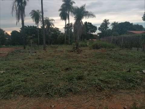 Servicio de limpieza de terrenos patios baldíos y poda de árboles - 3