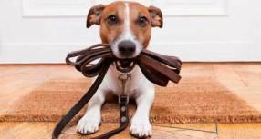 Paseador de perros en tiempos libres