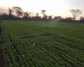 Campo de 10 hectáreas Paraguarí
