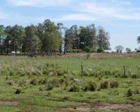 8 hectáreas en Santaní