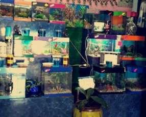 Peceras peces de colores y mantenimiento