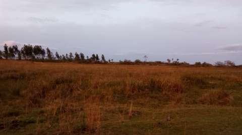 Campo en Tobatí