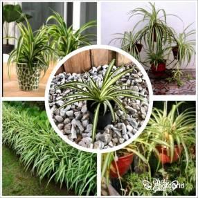 Plantas para tu jardín