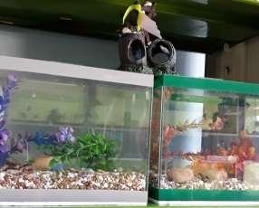 Pecera con pecesitos de colores