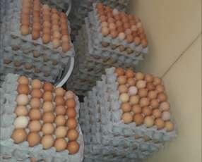 Huevos por plancha