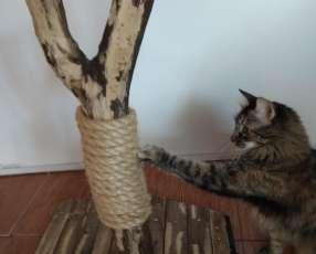 Arañador para gato