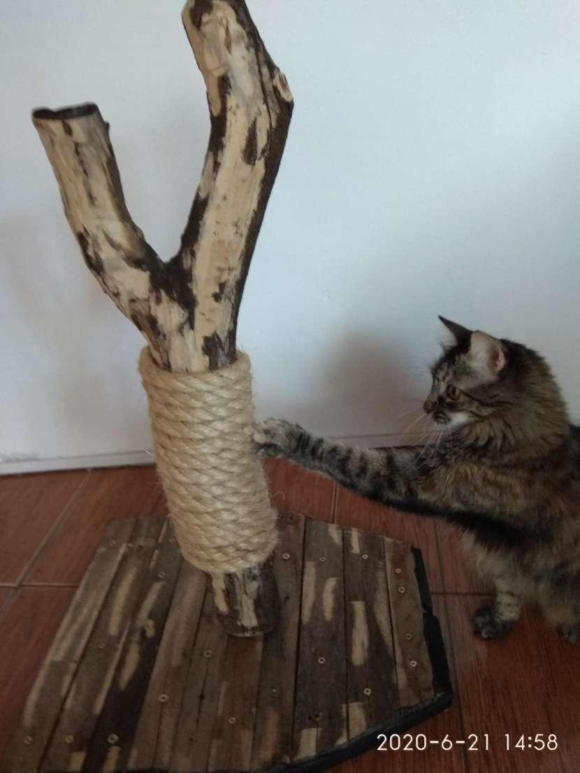 Arañador para gato - 0