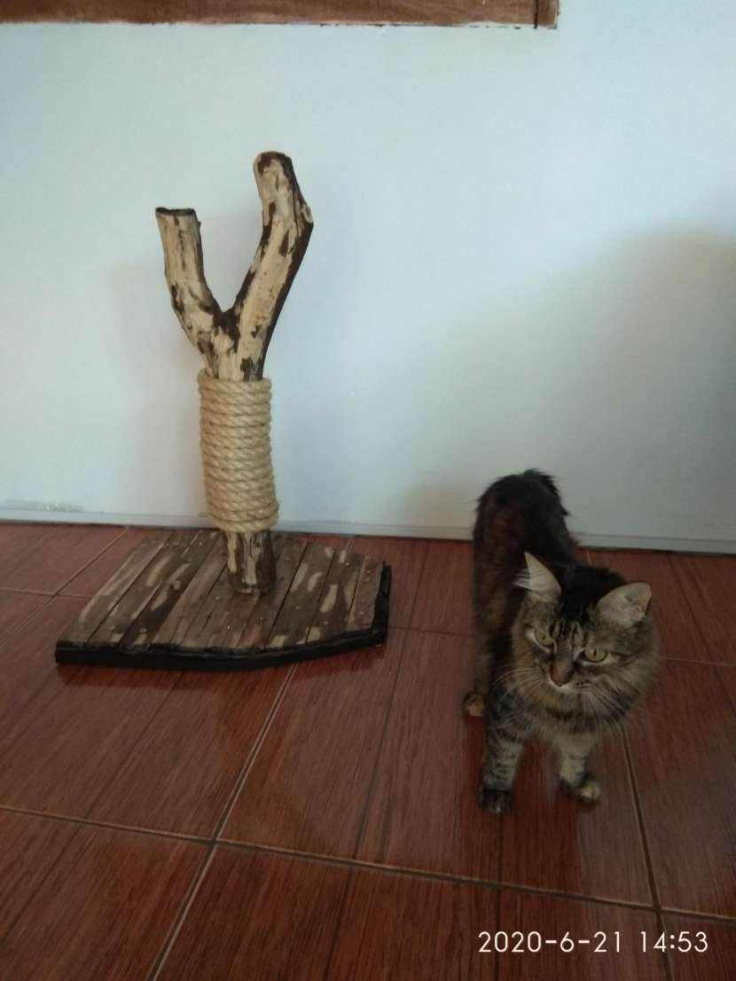 Arañador para gato - 2
