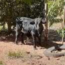 Terreno 6.3 hectareas cerca tebicuary-mi - 0