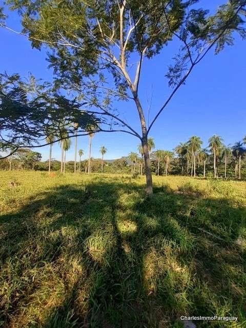 Terreno 6.3 hectareas cerca tebicuary-mi - 4