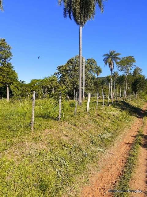 Terreno 6.3 hectareas cerca tebicuary-mi - 6