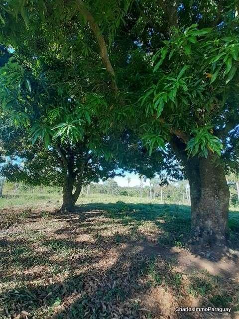 Terreno 6.3 hectareas cerca tebicuary-mi - 3