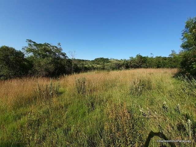 Terreno 4 hectareas la colmena / ybycui - 7
