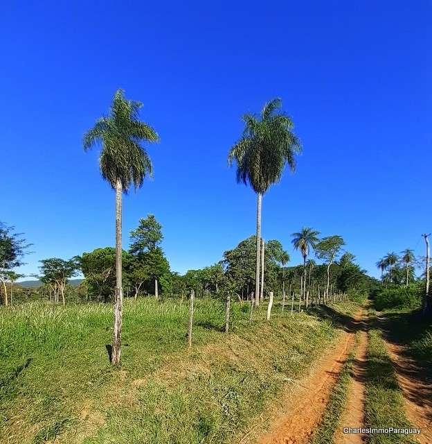 Terreno 6.3 hectareas cerca tebicuary-mi - 7