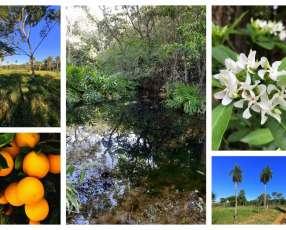Terreno 6.3 hectareas cerca tebicuary-mi