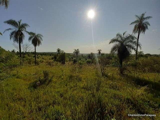 Terreno 4 hectareas la colmena / ybycui - 5