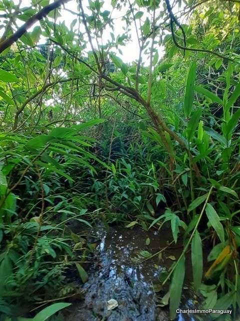 Terreno 4 hectareas la colmena / ybycui - 3