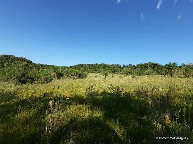 Terreno 4 hectareas la colmena / ybycui - 6