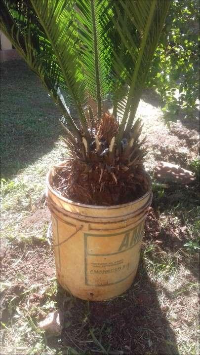 Planta de sica - 1