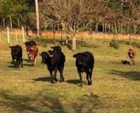 160 hectáreas en Caaguazú