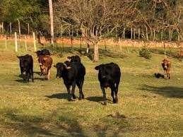 160 hectáreas en Caaguazú - 0