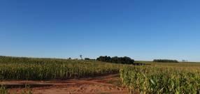 100 hectáreas en Santa Rita Alto Paraná