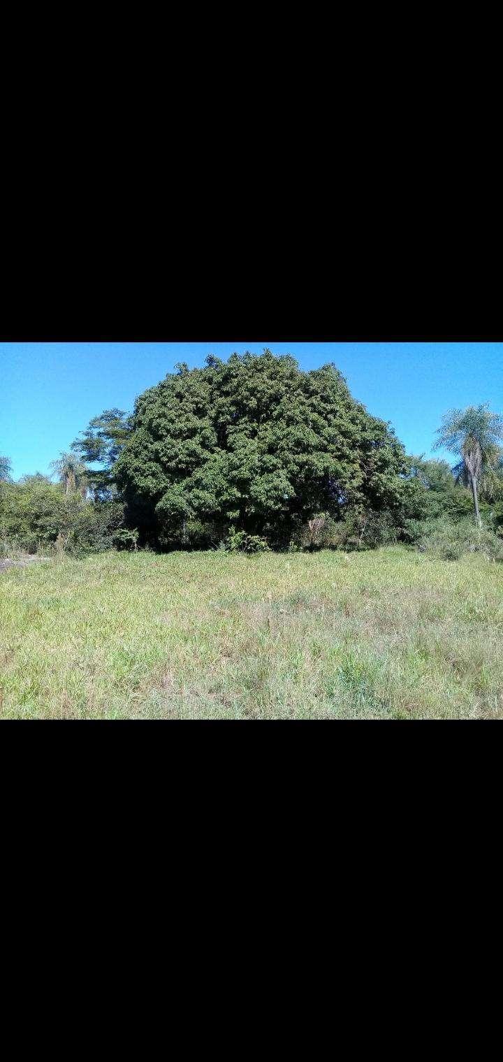 10 hectáreas en Valenzuela - 4
