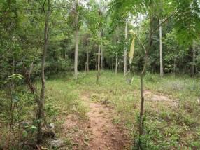 Terreno de 4,5 hectáreas en Caacupe Ypucu