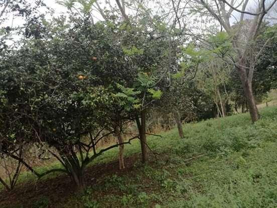 Terreno de 2 hectáreas en Caacupé Ytú - 0
