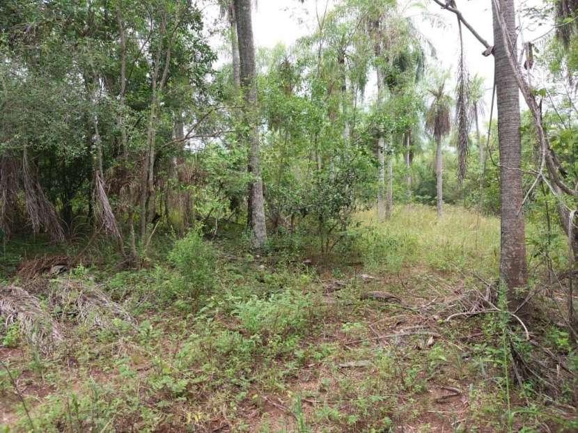 Terreno de 4,5 hectáreas en Caacupe Ypucu - 1