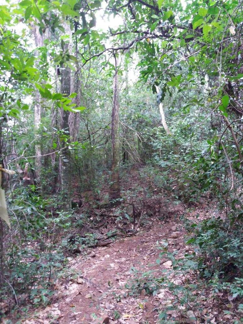 Terreno de 4,5 hectáreas en Caacupe Ypucu - 2
