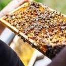 Manual de apicultura para emprendedores de la miel - 0
