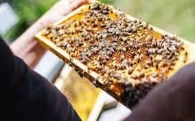 Manual de apicultura para emprendedores de la miel