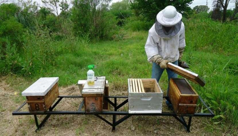 Manual de apicultura para emprendedores de la miel - 1