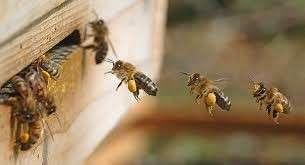 Manual de apicultura para emprendedores de la miel - 4