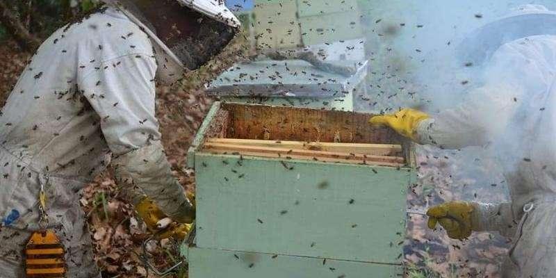 Manual de apicultura para emprendedores de la miel - 2