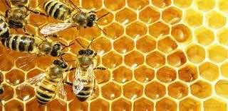 Manual de apicultura para emprendedores de la miel - 3